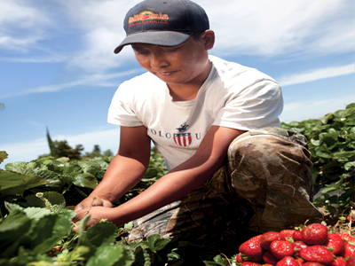 """We celebrate strawberries as an all-American fruit that provides the opportunity to better our lives,"" said Victor Ramirez, a third-generation strawberry farmer and the chairman of the California Strawberry Commission."